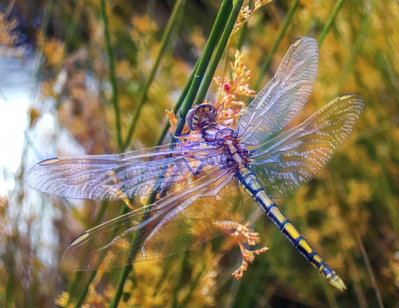 prayer for the water no 1 golden dragonfly style the purple